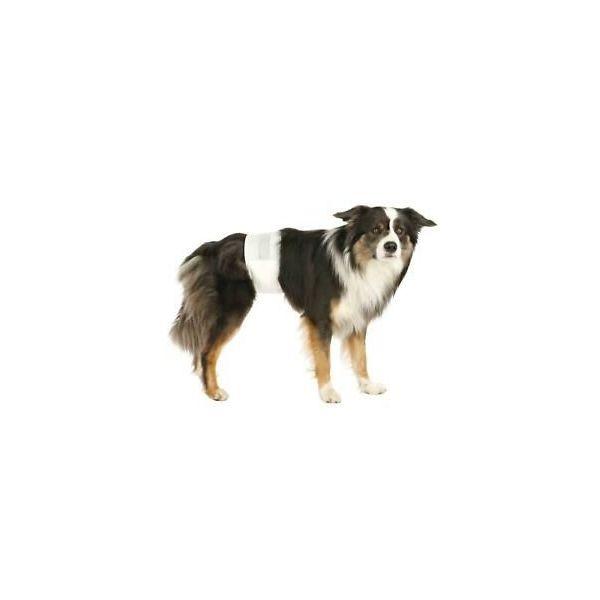 Couche pour chien mâle x12 - Trixie