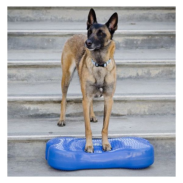 CanineGym® K9FITbone™