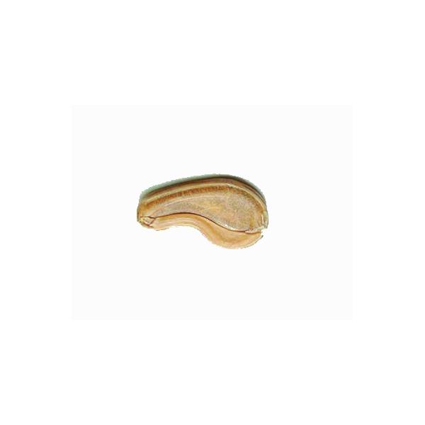 Côtelette peau de buffle